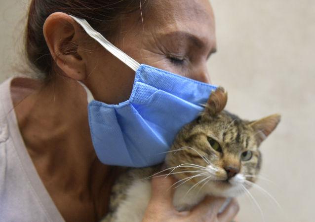 瑞士发现首例感染冠状病毒的家猫但没传播危险