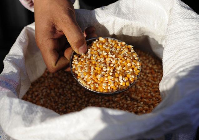 中储粮周五将拍卖1.8万吨乌克兰进口玉米 为本月第三次