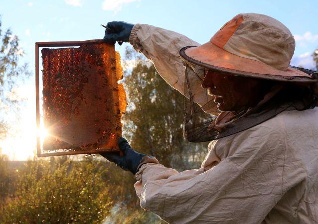 中国成为俄滨海边疆区蜂蜜主要消费国