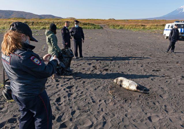 俄自然资源利用监督局:2020年自然环境遭破坏的损失约为2350亿卢布