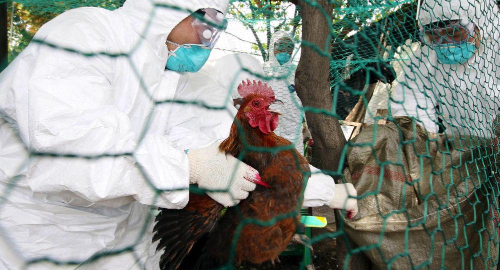 中國西南地區三人感染H5N6禽流感 一人死亡