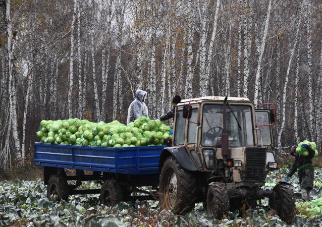 俄农产品出口中心:俄罗斯农工综合体产品出口每年增长16%
