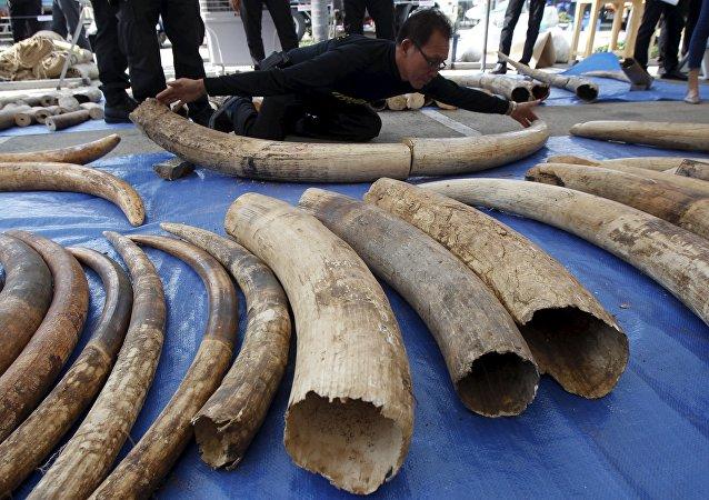 媒体:香港政府加强打击野生动物走私的措施