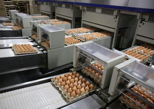 俄農業部期待禽肉和禽蛋生產完全恢復