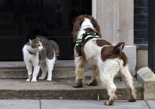 史賓格犬馬克斯成為獲得「動物界大英帝國勳章」的首只寵物