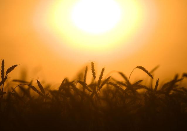 俄罗斯计划继续扩大农产品出口 首先面向中国