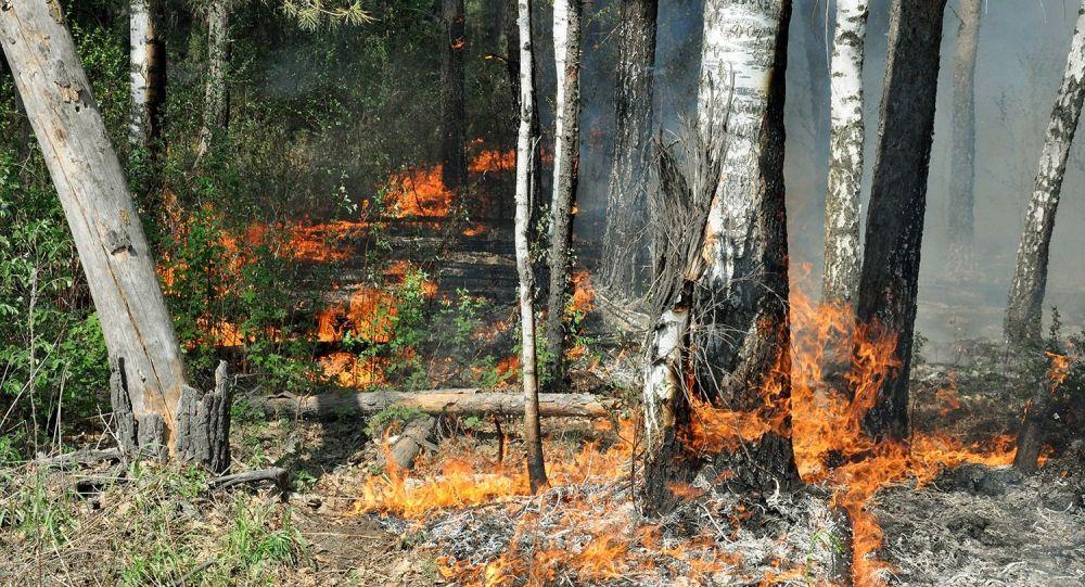 俄卡累利阿林火面积接近9000公顷