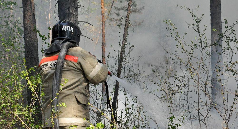 因高温和无雨雷暴滨海边疆区的国家公园发生50公顷火灾