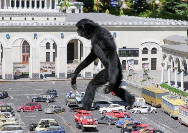 克里米亚微缩景观动物园中的长臂猿。