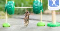 奥克萨娜?韦尔照片里的蝉正在举重。