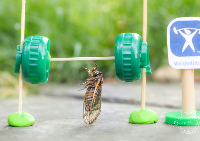 奥克萨娜•韦尔照片里的蝉正在举重。