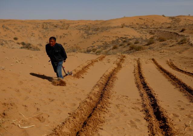 俄罗斯科学家的经验将有助于阻止沙漠扩张