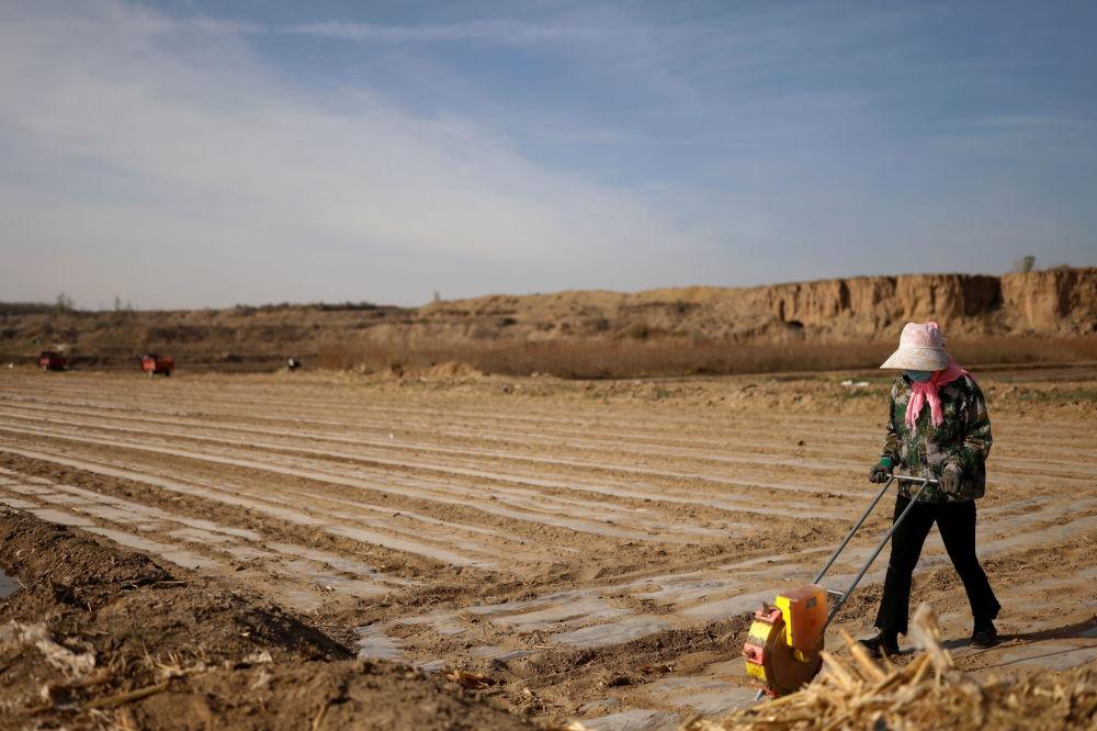 武威居民播种玉米作物。