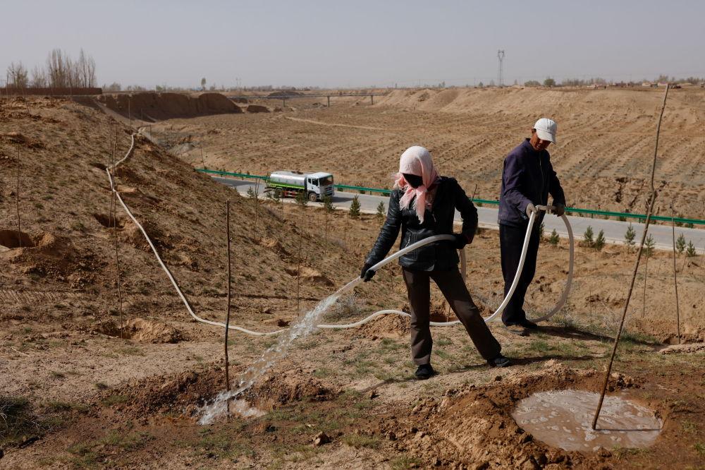 甘肃武威居民在沙漠戈壁浇灌树苗。
