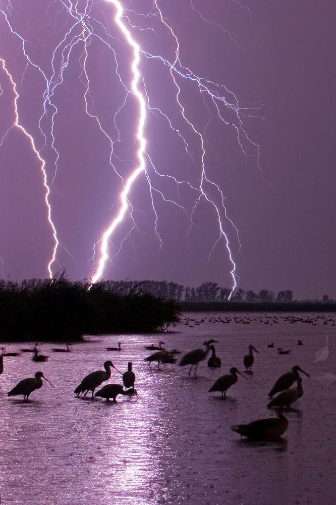 摄影师本斯·马特(Bence Máté)作品《紫色的天空》(Purple Skies)获2021年自然TTL摄影师大赛夜空类优评。