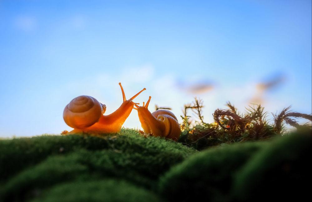 """摄影师菲利普·哈尔琴科作品《闲聊蜗牛》获得俄罗斯地理协会""""最美丽国家""""摄影大赛""""宏观世界(孩子们的眼睛)""""类奖项。"""