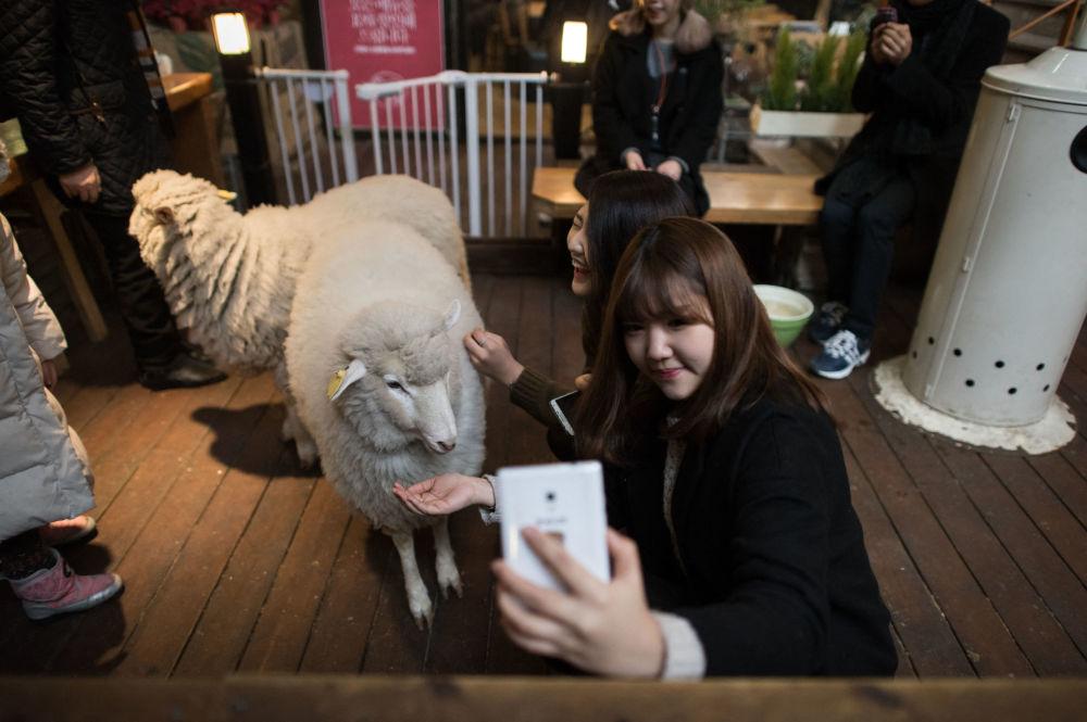 和蛇、羊或浣熊一起喝咖啡:不同国家的动物咖啡馆