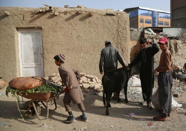 红十字会:近1800万阿富汗人需要紧急人道主义援助