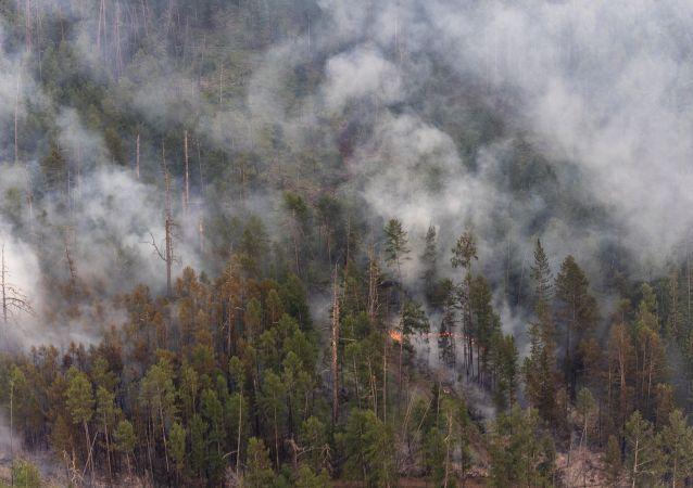 俄森林消防部門一晝夜撲滅72處火災