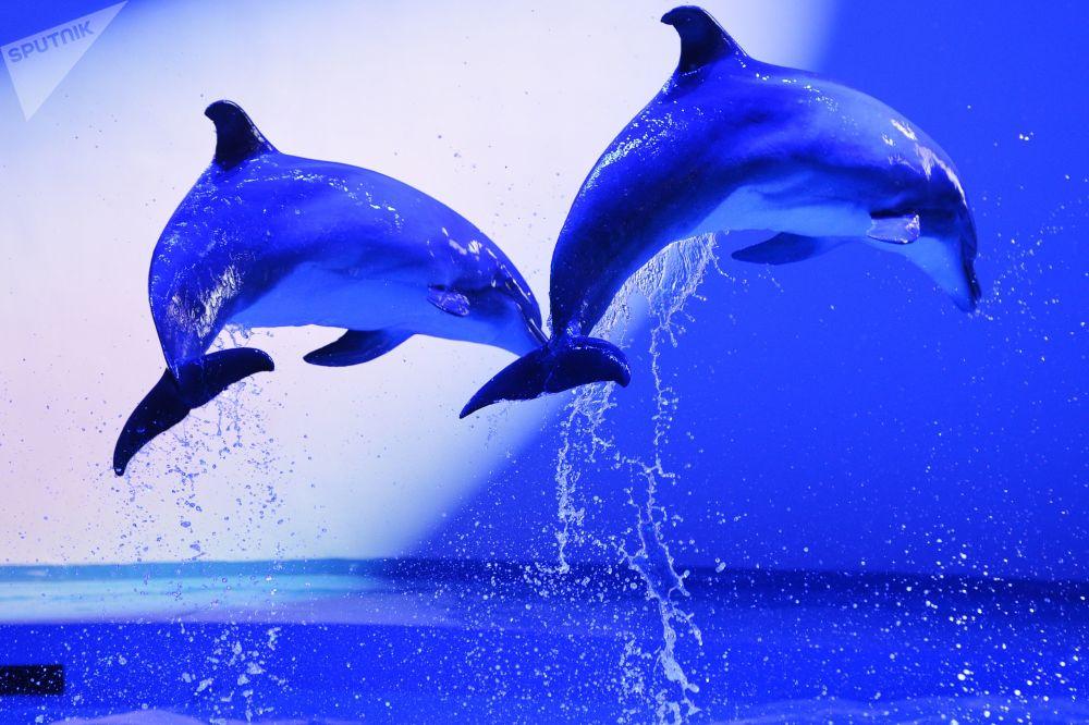世界鲸鱼与海豚日