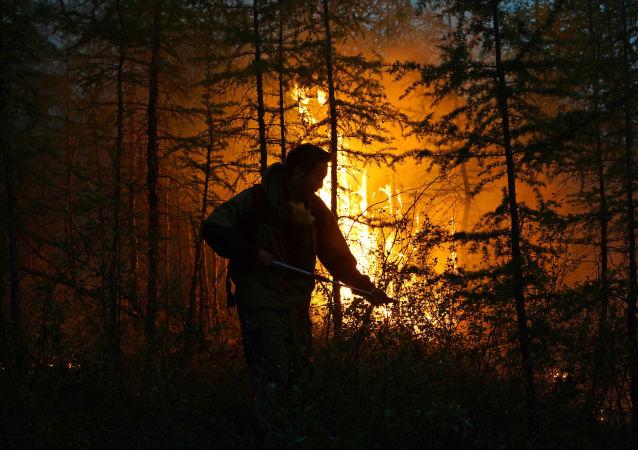 俄紧急情况部:自今年年初起远东地区发生近2800起森林火灾
