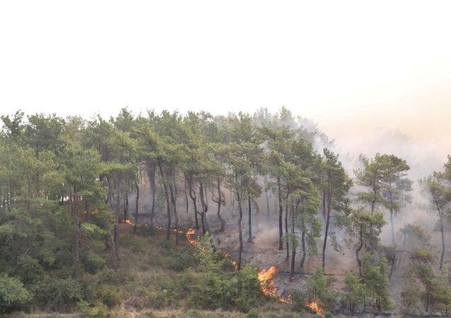 埃爾多安稱已逮捕一名涉嫌縱火引發森林火災的男子