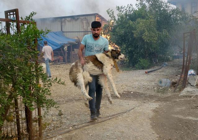 土耳其森林大火中受到威胁的动物们