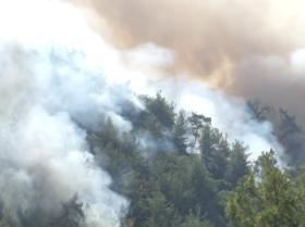 土耳其森林大火