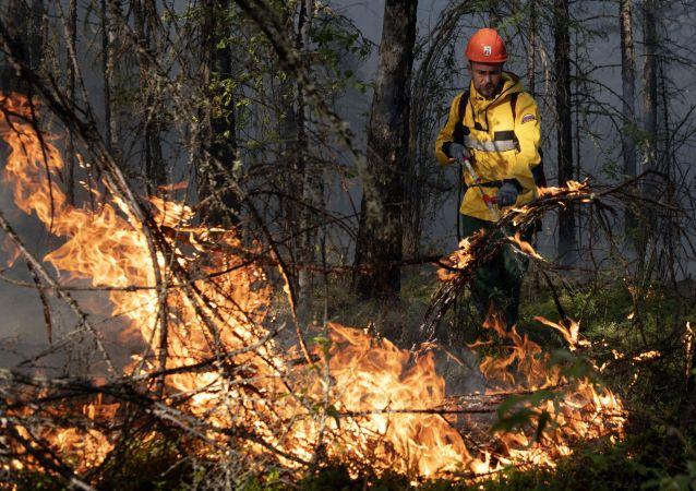俄马里埃尔共和国森林火灾过火面积增至900公顷