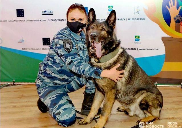 俄罗斯公务犬首次荣获意大利犬类忠诚奖