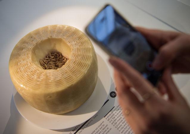法国Disgusting Food博物馆中展出的活蛆奶酪。