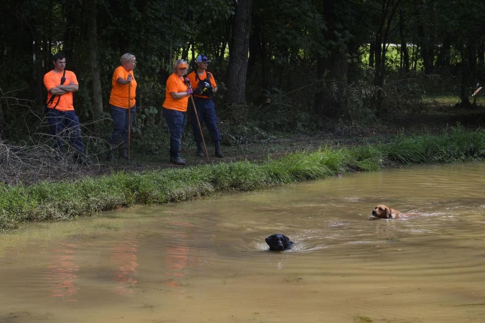 搜救犬在灾区搜寻失踪人员。