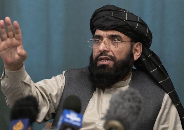 塔利班发言人苏海尔·沙欣