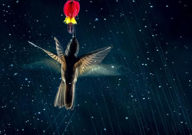 运动的艺术:2021年度鸟类摄影师大赛获奖作品一览