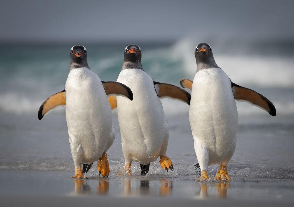 """美国摄影师约舒亚•加利茨基(Joshua Galicki)拍摄作品《我们对于这个海滩太性感》(We're Too Sexy For This Beach)入围2021年""""喜剧野生动物摄影奖""""决赛评选。"""