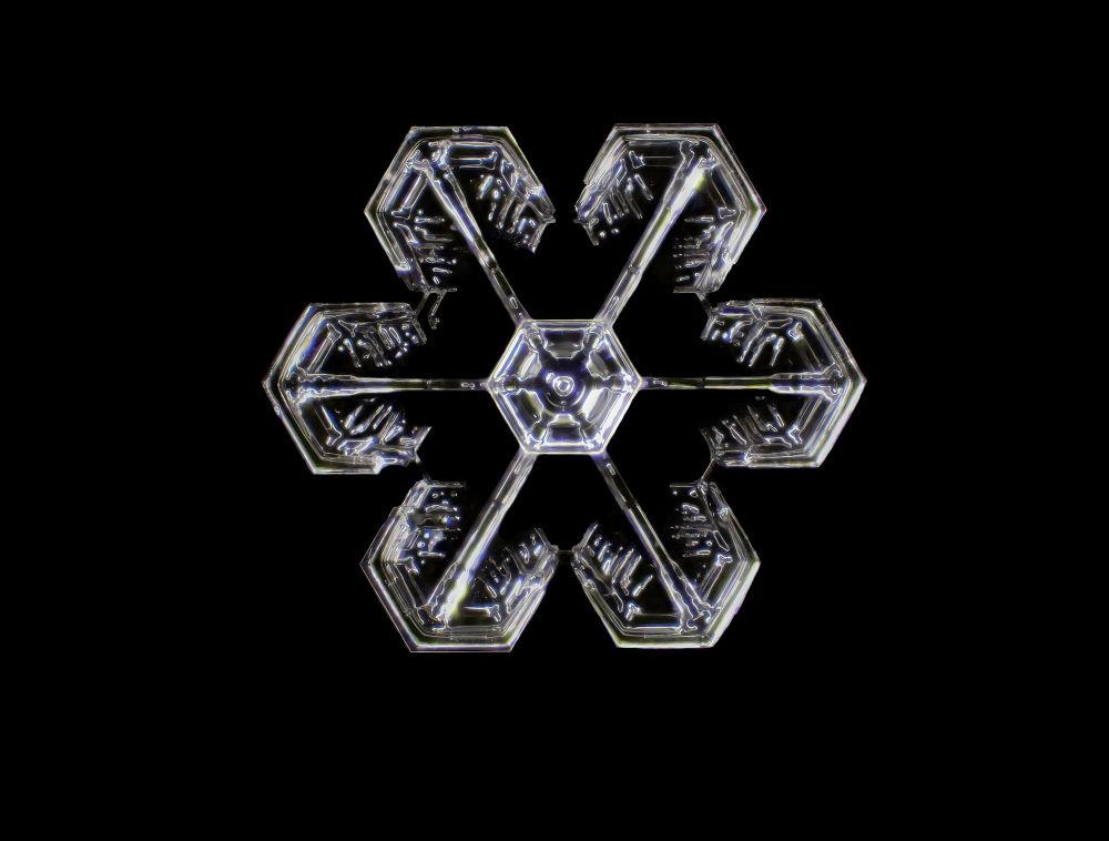 显微镜下的蝴蝶和雪花的纹理——2021尼康小世界摄影大赛获奖作品一览