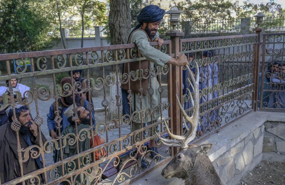 一名塔利班戰士在喀布爾動物園的獸欄里撫摸一隻鹿