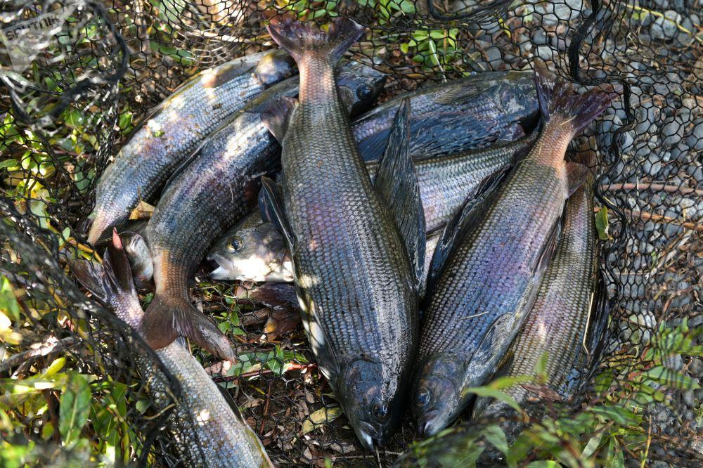 在西伯利亞釣魚。