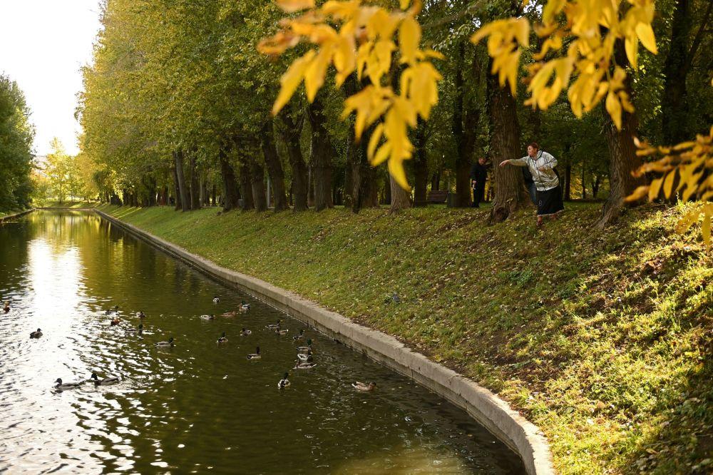 莫斯科红普列斯尼亚公园里喂鸽子的女子。
