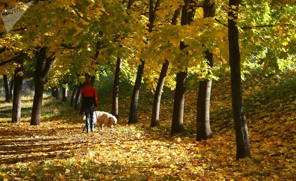 莫斯科列宁大街小公园里遛狗的姑娘。