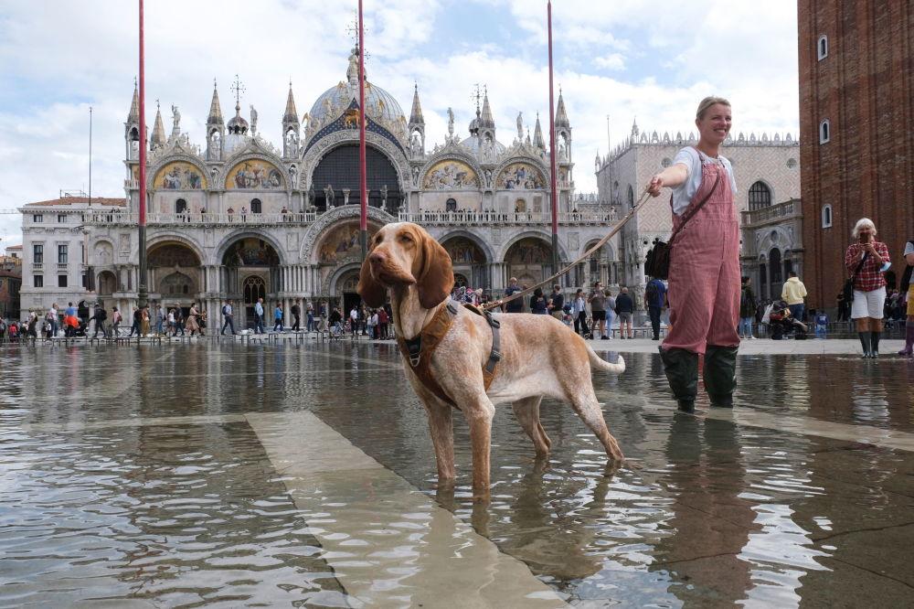 意大利威尼斯洪水期间,一个女孩在被洪水淹没的圣马可广场上遛狗。
