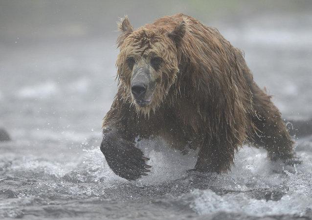 俄外交部:勘察加半岛被熊袭击法国女游客情况已有所好转