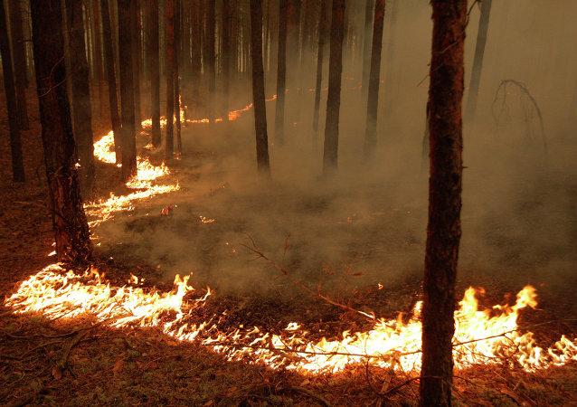 俄哈卡斯共和国所有火点均被扑灭