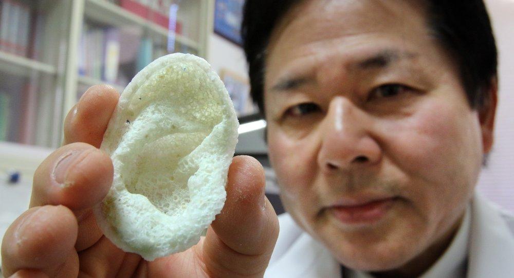 京大學醫學研究高戶毅教授出示人造的耳朵