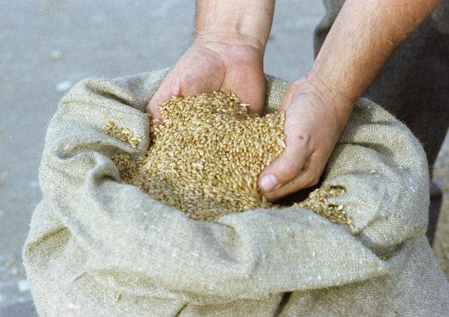 俄議員:俄羅斯考慮向朝鮮免費供應五萬噸小麥