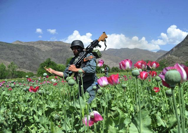俄安全會議秘書:北約部隊進駐阿富汗後該國毒品產量增長39倍