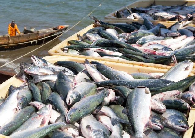 俄联邦动植物卫生监督局将与中韩研究鱼类出口过境证书问题