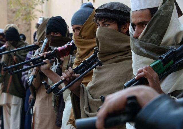 阿富汗总统顾问:喀布尔希望与塔利班建立代议制政府