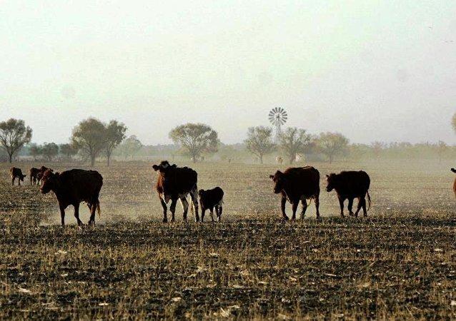 中国外交部证实暂停接受4家澳大利亚企业肉类产品的进口申报