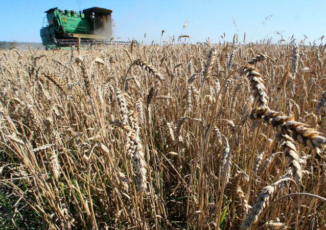 中粮集团:中粮与俄农业合作步入快车道